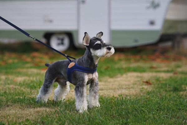 Hund seitlich mit Easy Harness Navy-Blue