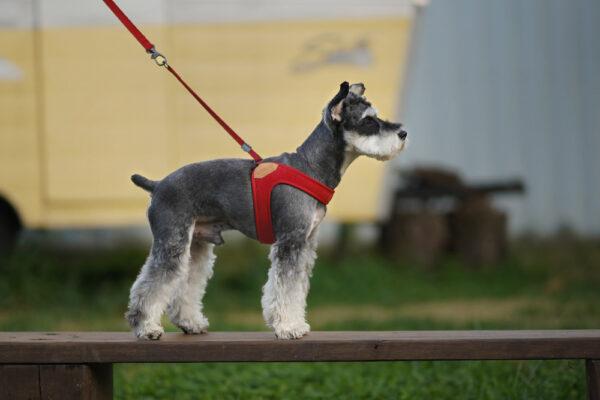 Hund seitlich mit Easy Harness Red