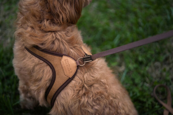Hundenacken mit Easy Harness Brown