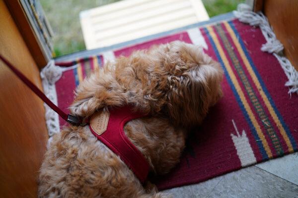 Hundenacken mit Easy Harness Red
