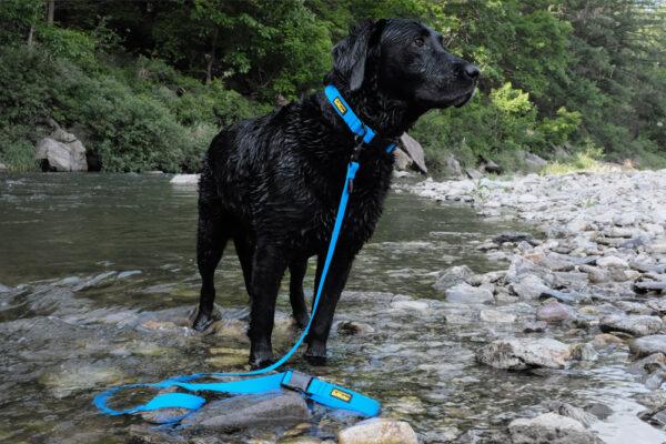Hund mit DeWater Leash Blue