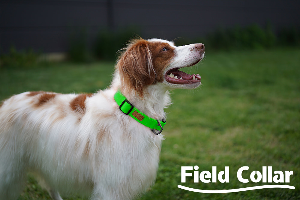 Field Collar Neon Green Key Visual