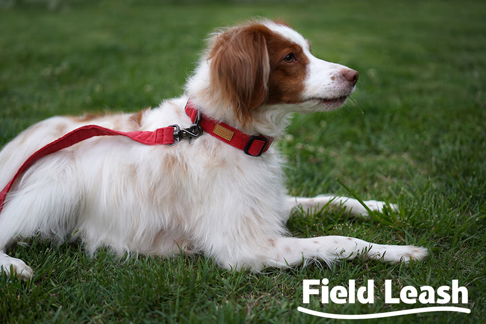 Field Leash Key-Visual