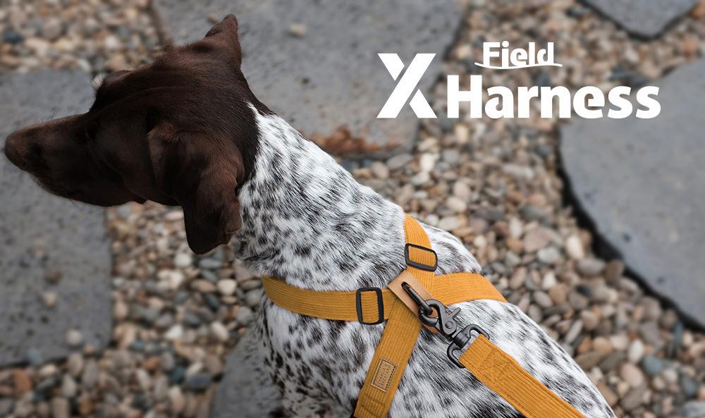 Field-X Harness Yellow Key-Visual