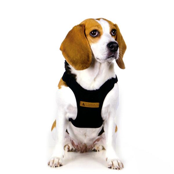 Hund mit Comfort Harness Black