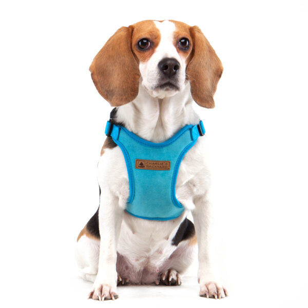 Hund mit Comfort Harness Blue