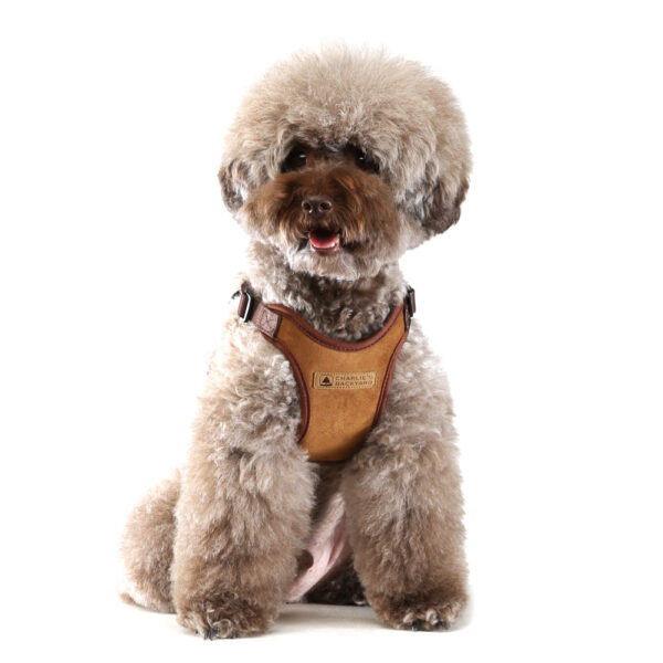 Hund mit Comfort Harness Brown