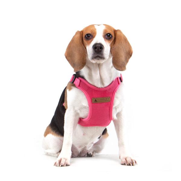 Hund mit Comfort Harness Pink