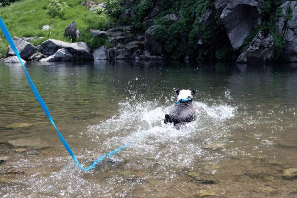 Hund mit DeWater Leash Blue 3m