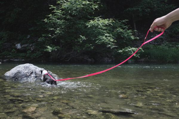 Hund mit DeWater Leash Pink 3m