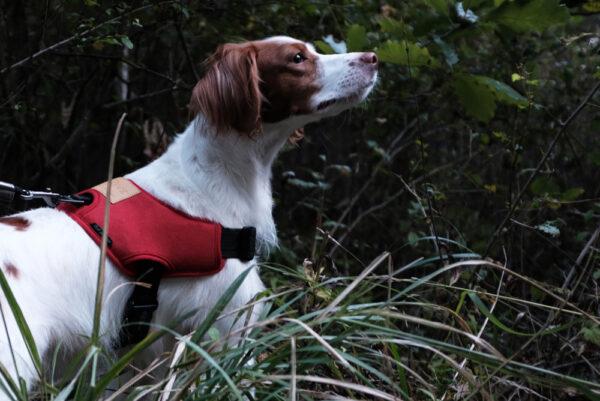 Hund seitlich mit Above Harness Red