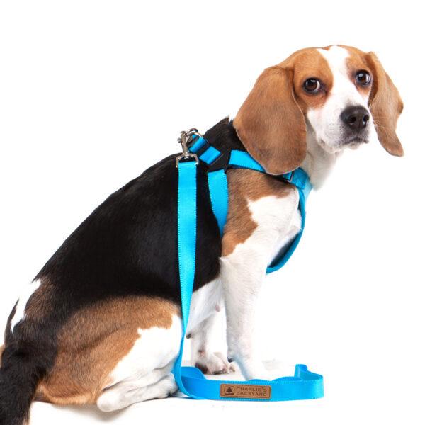 Hund seitlich mit Comfort Harness Blue