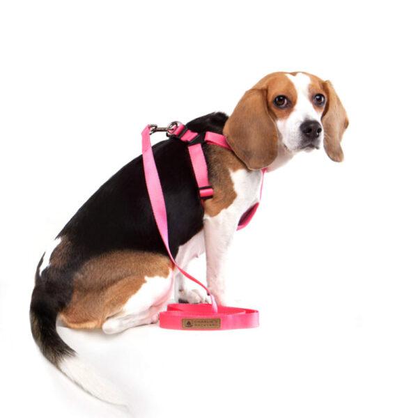 Hund seitlich mit Comfort Harness Pink