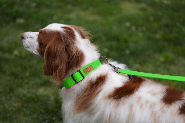 Hund seitlich mit Field Leash Neon Green