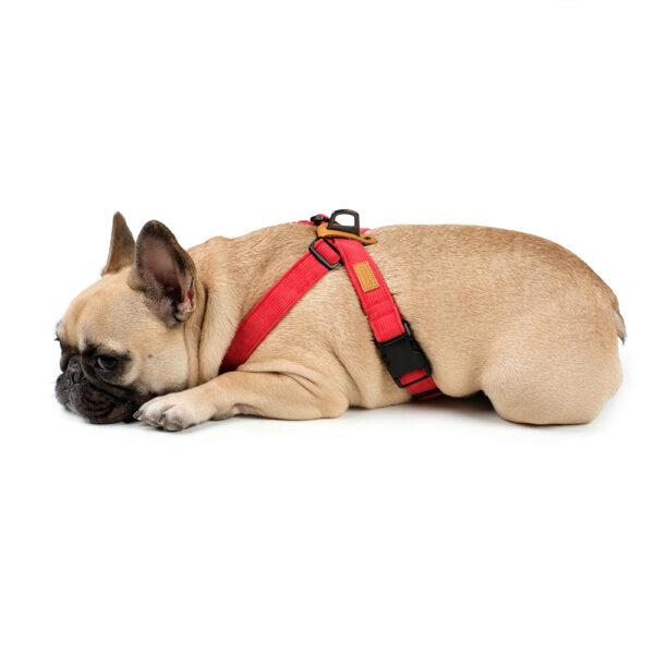 Hund seitlich mit Field-X Harness Red
