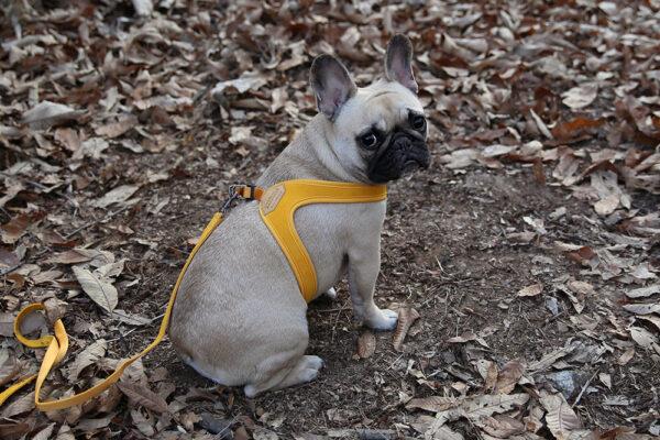 Hundenacken Buckle Up Easy Harness Yellow