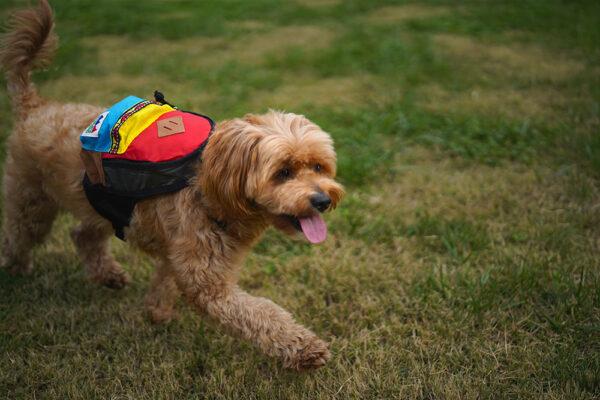 Hund mit Charlie's Bag