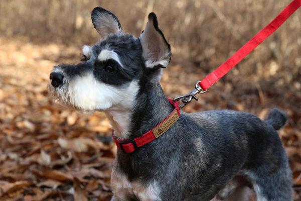 Hund seitlich mit Easy Leash Red